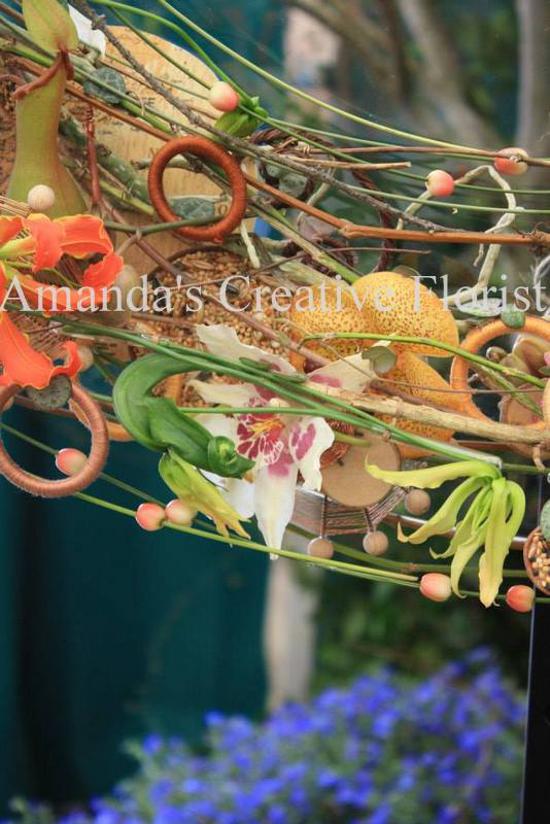 Amanda Coghill 2013 RHS Chelsea Flower Show