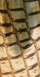 Gold Crocidile FMC 3120