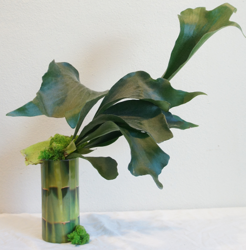 Bamboo Sleeve - Staghorn Fern - Green Moss